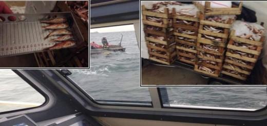 5 ton balığa el konuldu