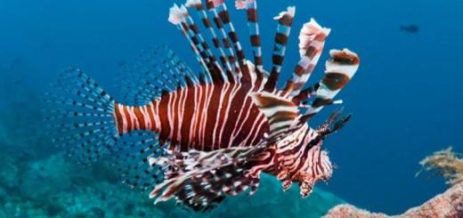 Aslan Balığı Egede