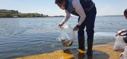 Balıklandırma-Mayıs-2020 (2)